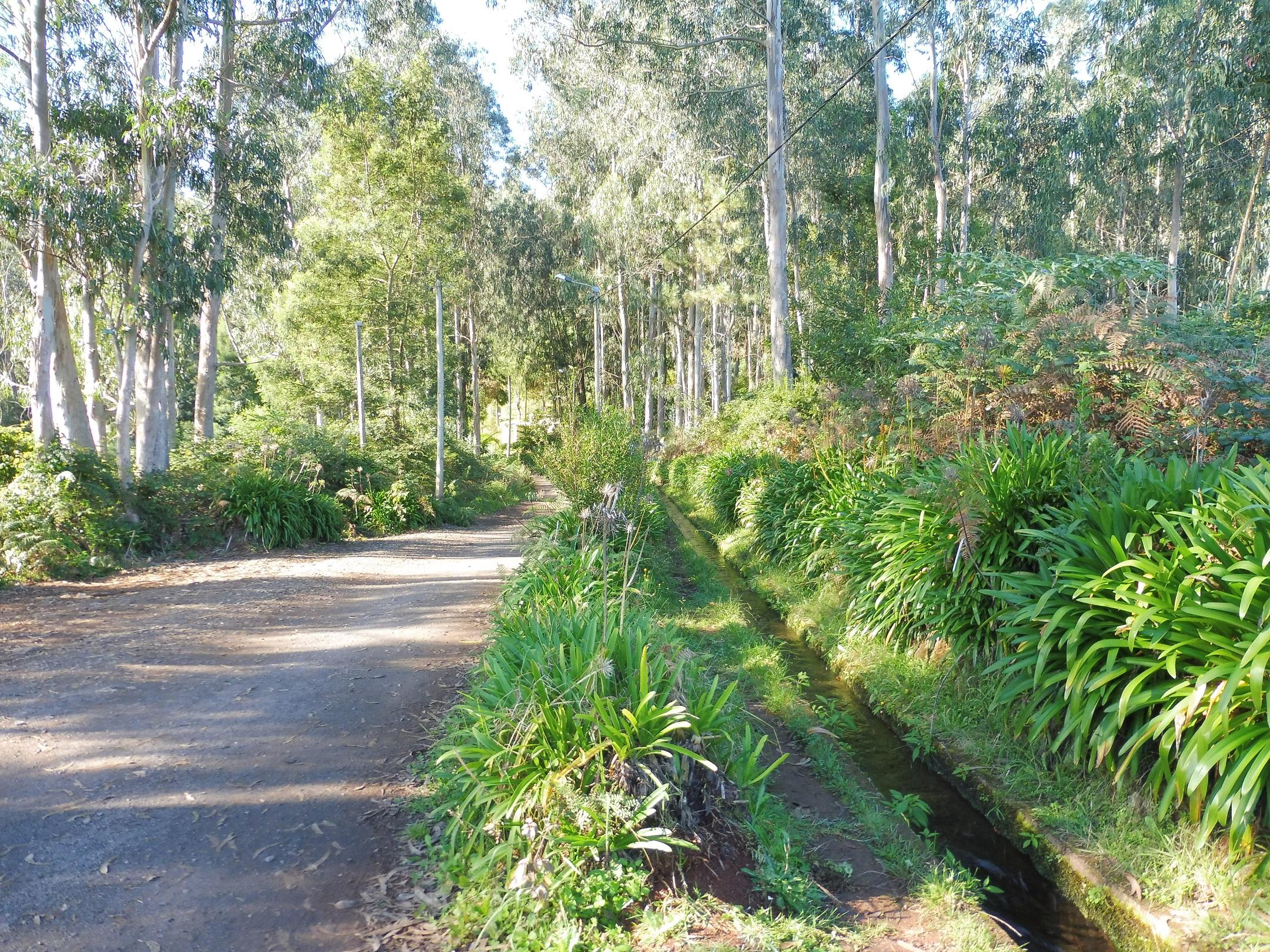 Eukaliptuszfák szentélyében