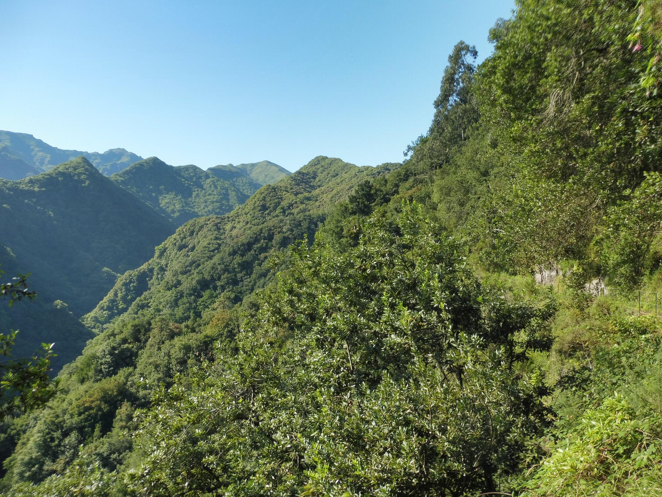 UNESCO-védettséget élvező babérerdők
