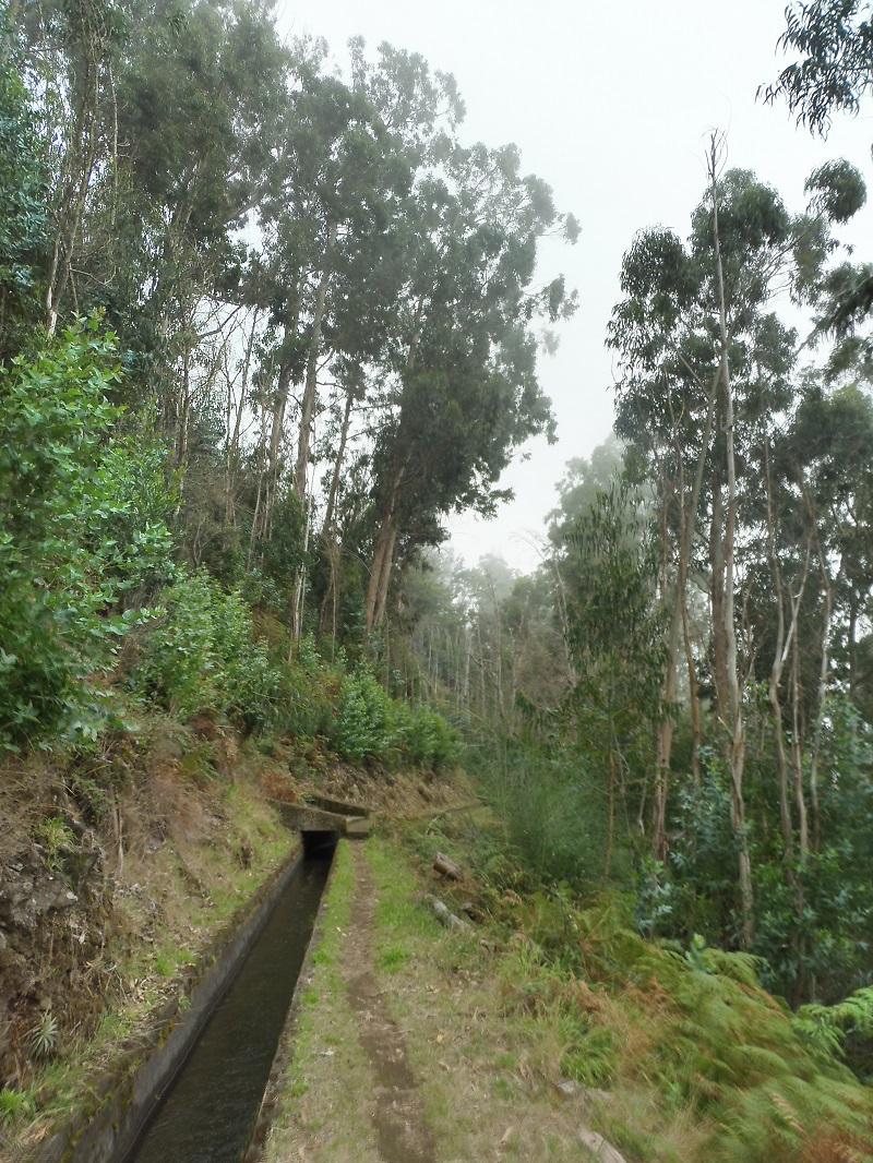 Eukaliptuszerdőben