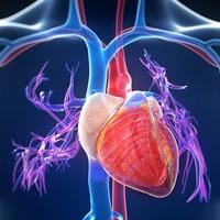 8 jel, amely arra utal, hogy a cukorbetegség a szívedet is támadhatja