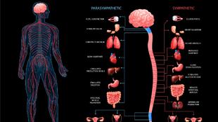 Mitől függ idegeink egészsége? – 9 veszélyeztetett állapot