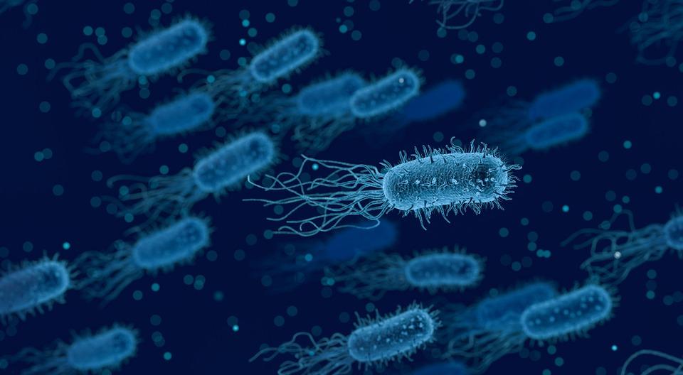 bacteria-3662695_960_720.jpg