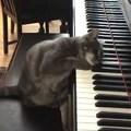 Macskazene zongorán