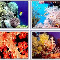Napernyővel védik magukat a korallok
