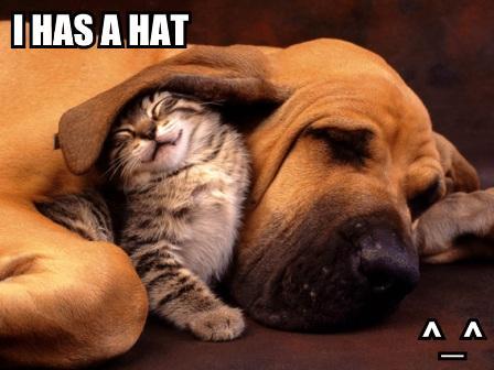 Macskák és kutyák