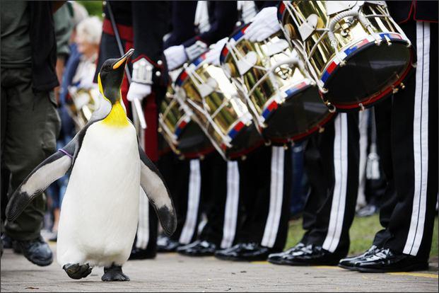 Lovag lett a pingvin ezredes