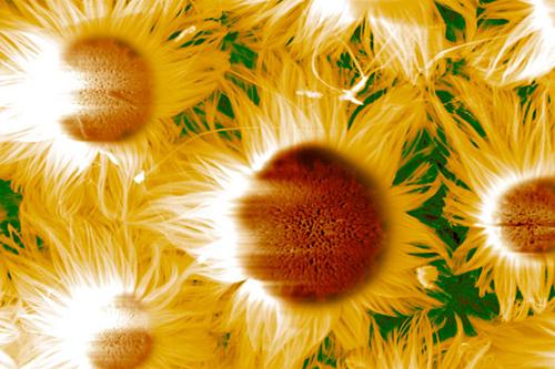 Nanoszál-virágok