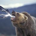 Lehánytam Medvesrácot