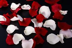Rózsák Háborúja