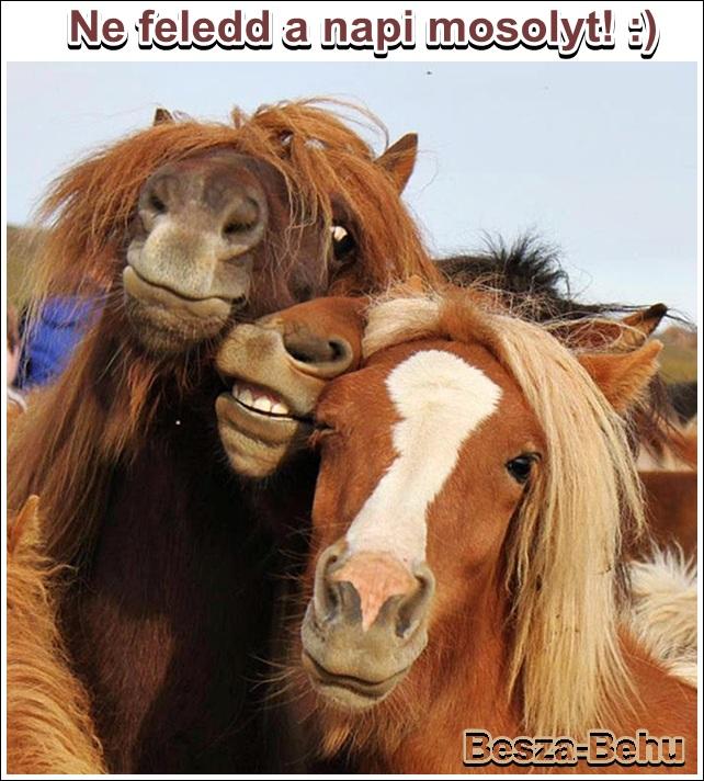 boldog születésnapot lovas képek Napi mosoly   Megoszthatod boldog születésnapot lovas képek