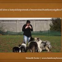 Mi köze a kutyakiképzésnek a beszerzésed hatékonyságához?