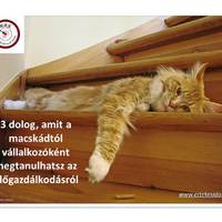 3 dolog, amit a macskádtól vállalkozóként megtanulhatsz az időgazdálkodásról