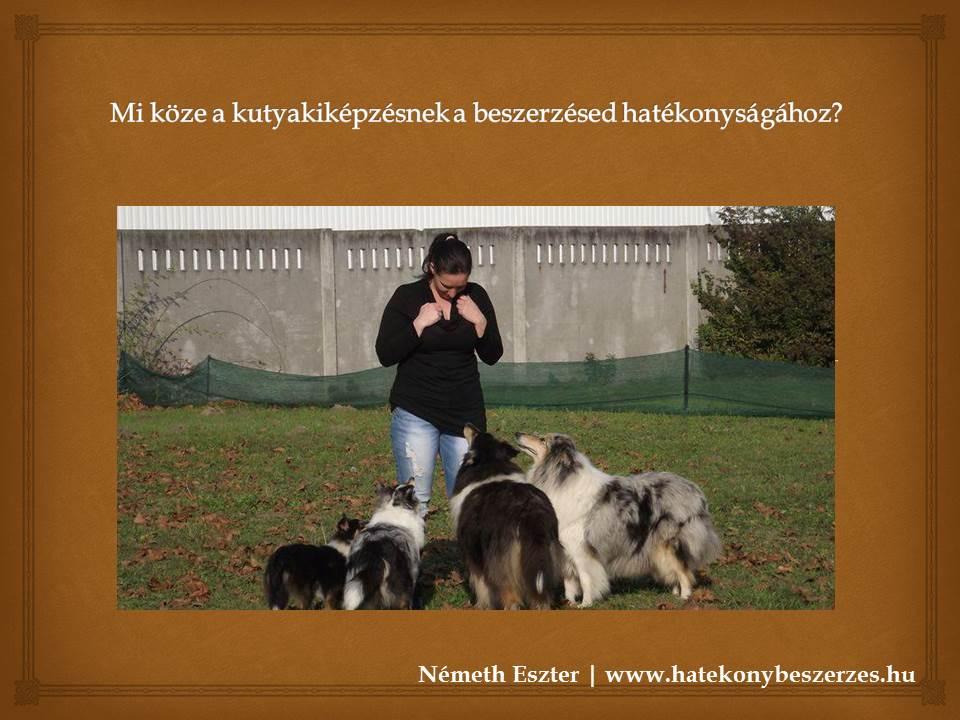 mi_koze_a_kutyakikepzesnek_a_beszerzesed_hatekonysagahoz.jpg