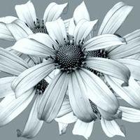 Virágbolt rejtelmei a menyasszony szemével