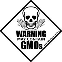 Toxikus és tápanyagszegény a GMO kukorica
