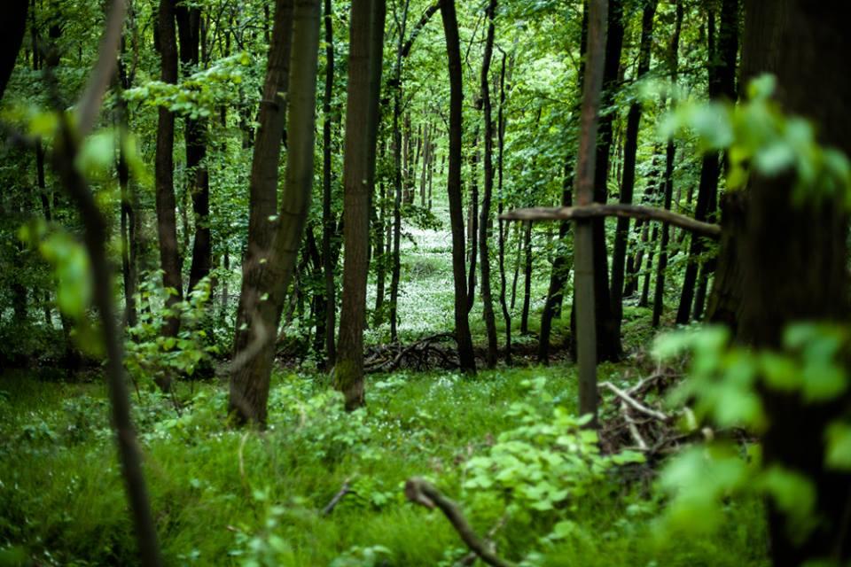 erdő4hárságyipéter. jpg