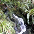 Mount Cargill: hógolyózás az esőerdőben