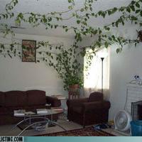 Házevő növény
