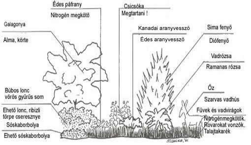Forestcopy.jpg
