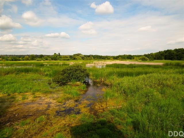 Merzse mocsár, egy Természetvédelmi terület a város szorításban