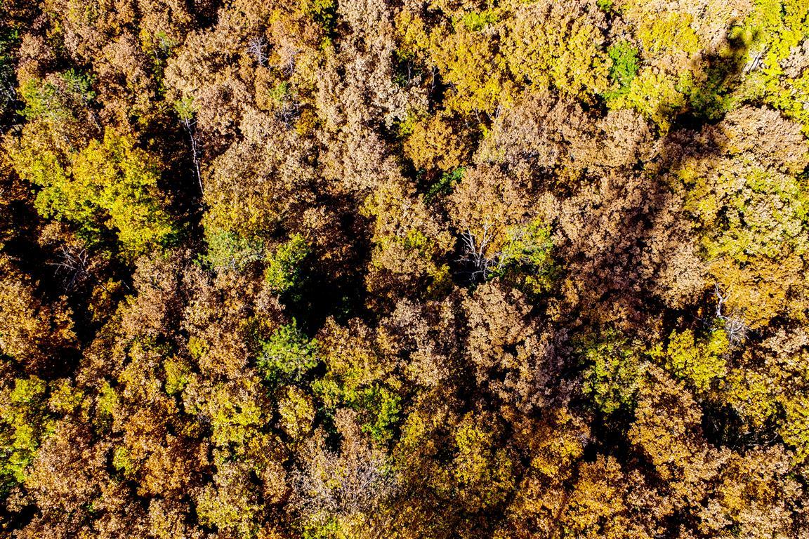 Az erdő a kilátó tetejéről