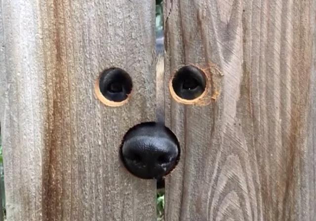 peeking-penny.jpg