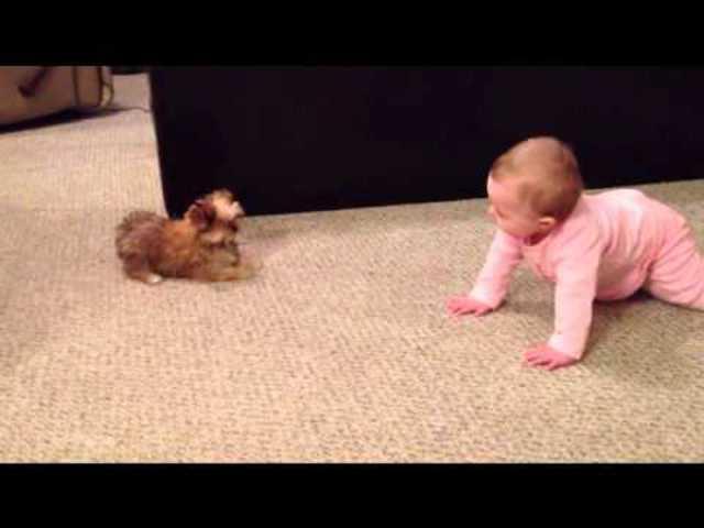 A baba és kiskutyája beszélgetnek ee7c25e0aa