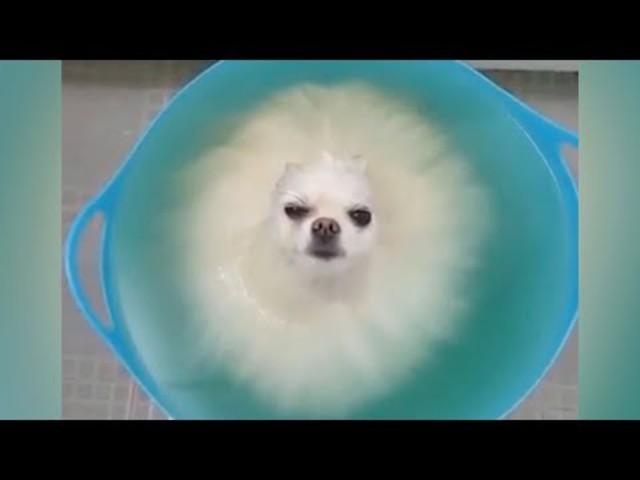 Vicces állatok - Merj élni a056517573