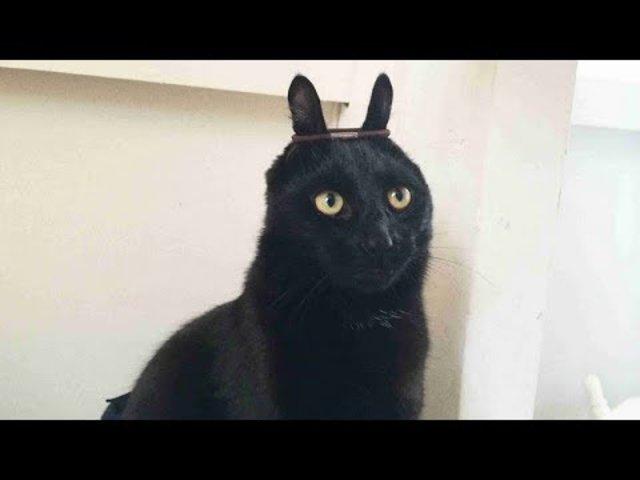 Funny CAT Compilation - Vicces Cicák  D - Merj élni 63a97e4ed3