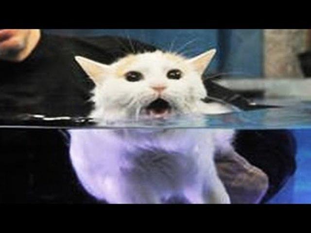 A macskák utálják a vizet - Merj élni 34cc798daa