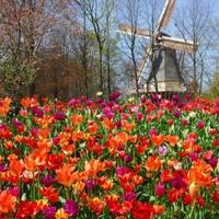 A virágok fővárosa, Keukenhof