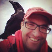 Oh yes, he is real wild bird. Ó igen, ő igazi vad madár. @reni.atesz #mertutaznijo #canarias #eupolisz #animals #travelphotography #travel #roquedelosmuchachos