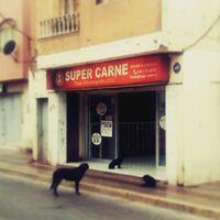 Van egy új közmondás: ül, mint kutya a hentes előtt. #mertutaznijo #chile #copiapo #dog
