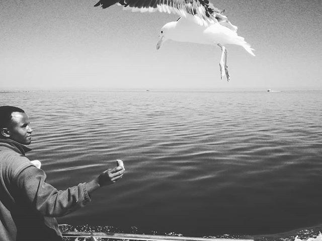 Dinnertime. #mertutaznijo #eupolisz  #namibia #afrika #walvisbay #waalvisbaai #feeding #cruise #seagull #