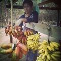 A piros banán esete