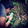 A kis kíváncsi koati. Az ormányos medve Amerikában él, nagyon barátságos és kiderült, hogy fotogén is:) #mertutaznijo @mert.utazni.jo #eupolisz #costarica #jungle #alajuela #coati #travelling #travelphotography #travel @reni.atesz