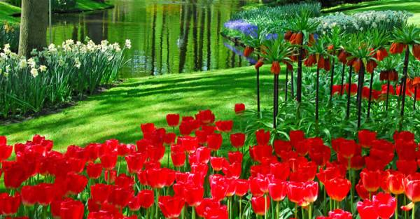 Holland-s-Keukenhof-Gardens_Perfect-place-for-relaxation_5071.jpg