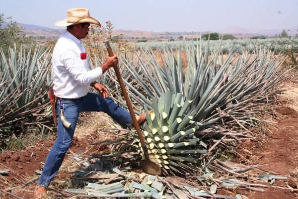 Mexico - Tequila (15).JPG