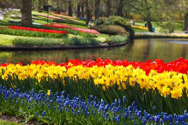 keukenhof-flower-gardens.jpg