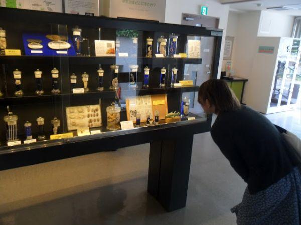 parasite-cabinet-2-meguro-parasitological-museum-tokyo-japan.JPG