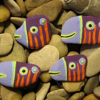 Tigriscsíkos ibolyahalak / Tigerstriped Violetfish