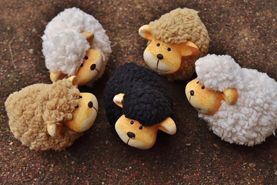 sheep-1767171_960_720.jpg