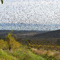 Millió szárnysuhogás a Madaras Pincénél