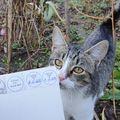 Független megfigyelő macskák, munka közben – ügyeletben vannak a mai választáskor is...