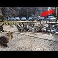 """Ciocu' mic"" & harcos pet a pet shopnál! VIDEÓ"