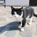 Megmenekül a vár macskája – de marad a dilemma is