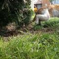 Elmenő macskák