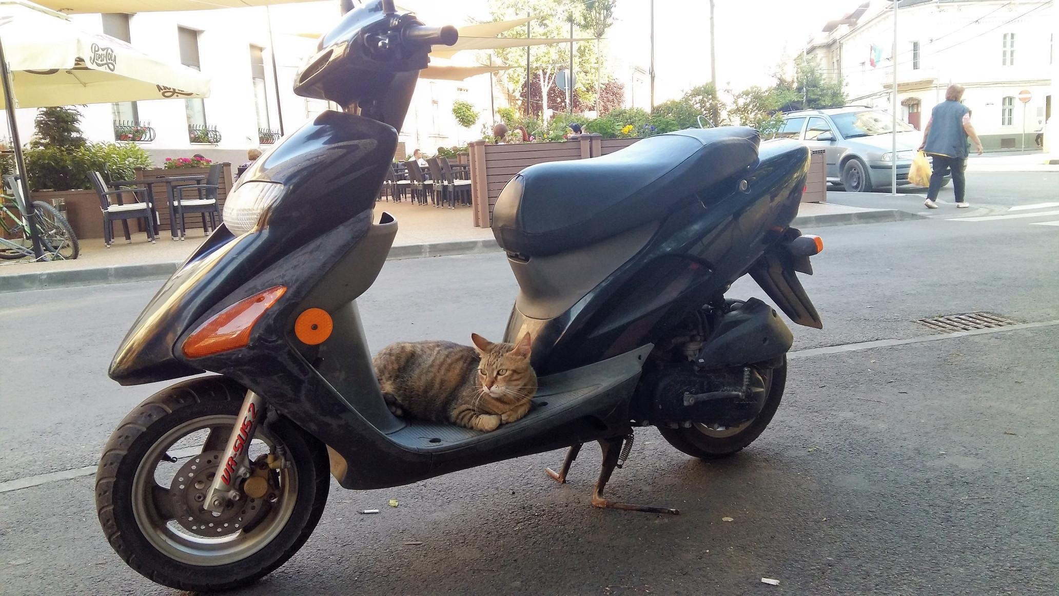 szeghalmi_ors_easy_rider.jpg