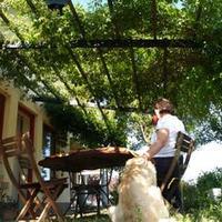 Bio-klímaberendezés, avagy természetes menedék a nyári nap heve elől