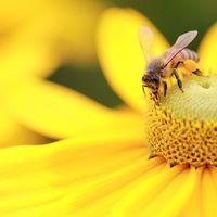 A méhek pusztulása